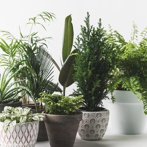 4 Indoor Plants For Beginners…