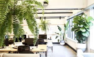 Plants at workplaces