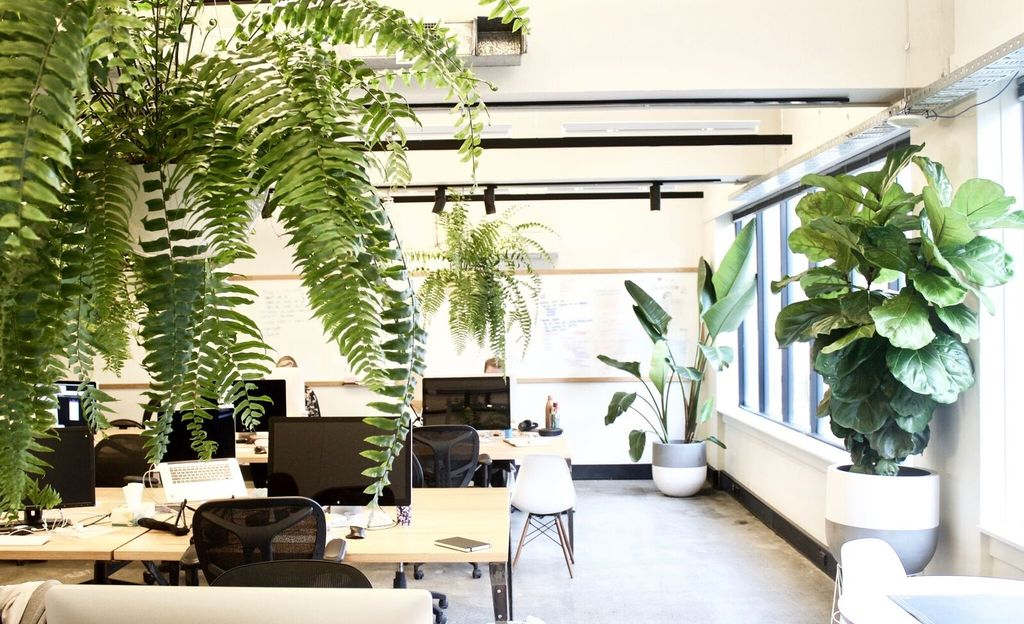 Benefits of having plants in office environment