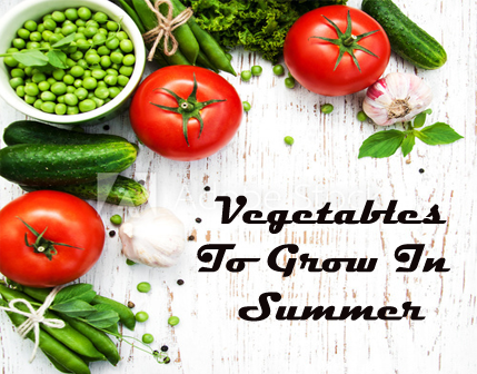 vegetables for summer